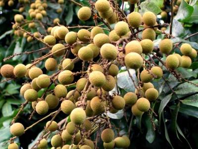 żółte owoce