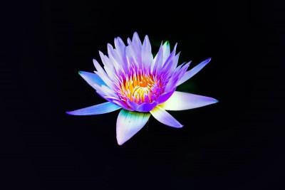 kolorowy kwiatek
