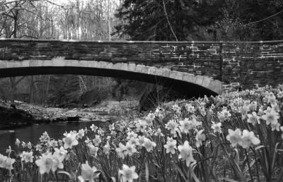 most, miasto, kwiaty