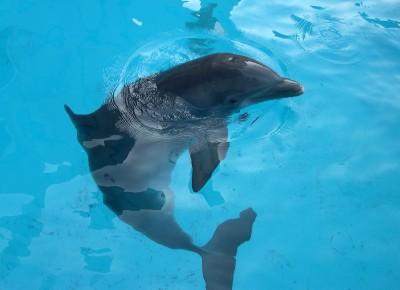 delfin woda