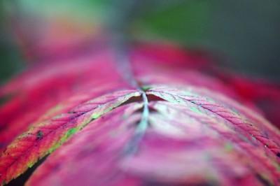 liść, makro, kolory