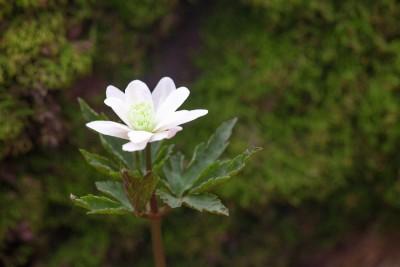 biały kwiatek