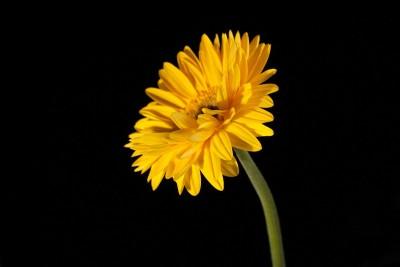 żółty kwiatek 03