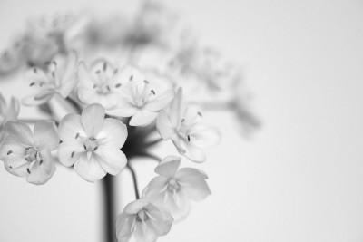 kwiatek, czarno-białe