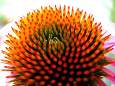kwiatek, środek
