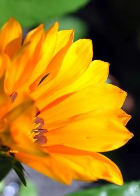 pomarańczowy kwiatek