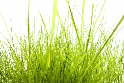 trawa, zielona