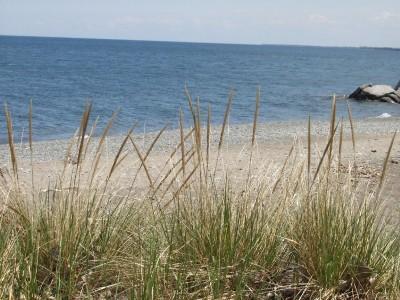 plaża,  morze, trawa