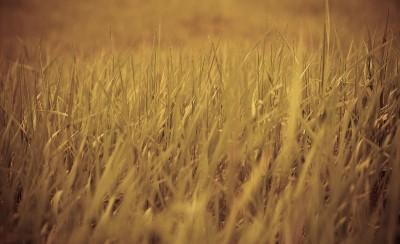 trawa, łąka 01