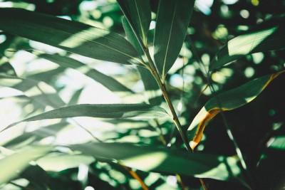 liście, trawa