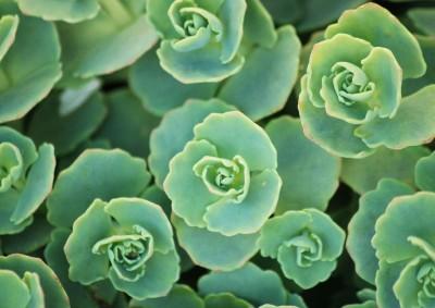 zielona roślina
