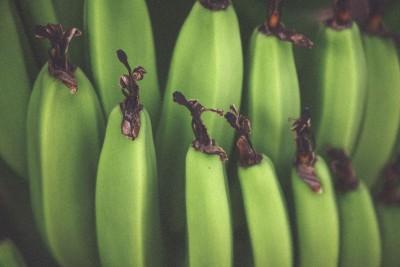 zielone banany, owoce