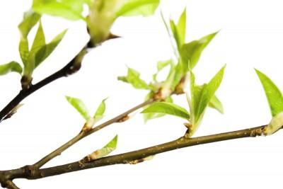 gałęzie , liście