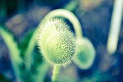 roślina , zieleń